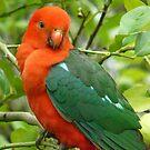 Australian King Parrot Sitting Pretty by Margaret Stockdale