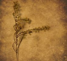 Weeds (without words) by Tia Allor-Bailey