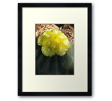 Yellow Halo Framed Print