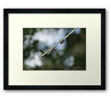 Flys on the End of a Branch Framed Print