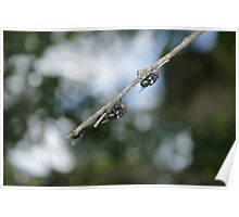 Flys on the End of a Branch Poster