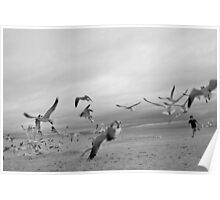 Running with Seagulls Poster