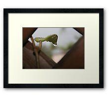 Droplet coming off a Leaf Framed Print