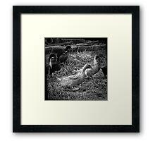 Farm Ducks Framed Print