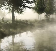 Green Trees and Fog  by Sharon Hagler