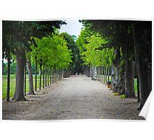 Park path Poster