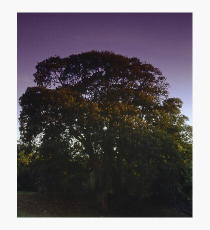 Evening skies, Newhailes Estate, Musselburgh, Scotland Photographic Print