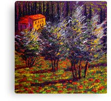 Tuscany Poppies in the Olive Grove Canvas Print