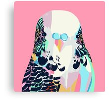 Budgerigar Pink Canvas Print