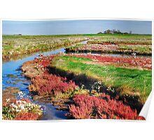 Wetlands 5 Poster