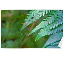 Insect on fern Poster