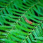 Fern by Jaime Pharr