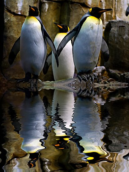 King Penguin, Antarctic, Montreal Biodome by Yannik Hay