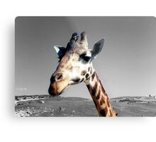 Sticking her neck out Metal Print