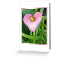 Pink Calla Lily Greeting Card