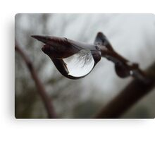 Twiglet drop Canvas Print