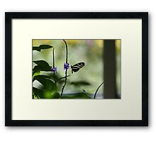 Butterfly in The Pavilion Framed Print