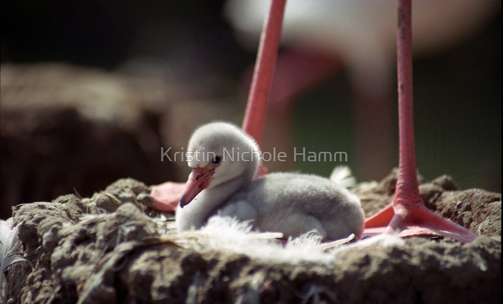 Flamingo Chick in Nest by Kristin Nichole Hamm