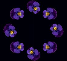Ring of Pansies by RosNapier