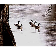 Floating on a Winter River Photographic Print