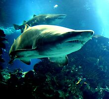 Shark Hunt by Charles Buchanan