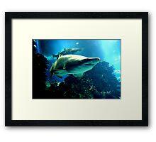 Shark Hunt Framed Print