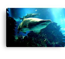 Shark Hunt Canvas Print