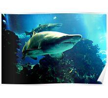 Shark Hunt Poster
