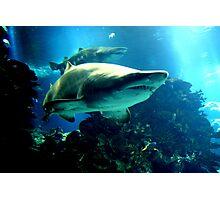 Shark Hunt Photographic Print
