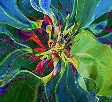 Harlequin Poinsettia by RC deWinter