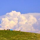 Fool on the HIll,...wish it were me. by Mike Cressy