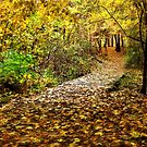 Take a Walk With Nature - Erie, PA by Kathy Weaver