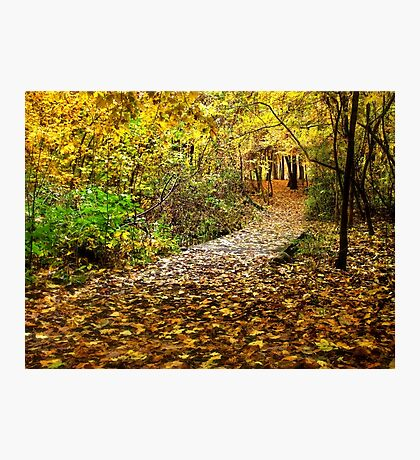 Take a Walk With Nature - Erie, PA Photographic Print