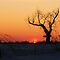 Tree In Silhouette by lorilee