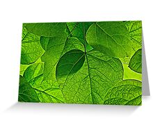 Catalpa Leaves Greeting Card