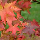 Autumn leaves by Arie Koene