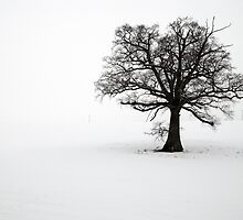 Lone Tree in the Snow by Greg Webb