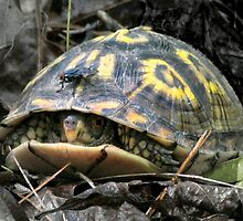 """Will you flit a little faster?"" said the turtle to the fly. by Jean Gregory  Evans"