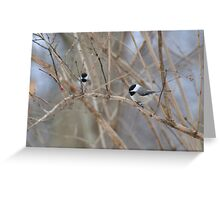 Chickadee on bare branch Greeting Card