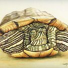 Red Eared Green Slider Turtle by Charlotte Yealey