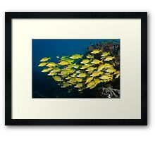 Jim Gooding Print Request #3 Framed Print