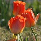 Spring is Tulips by Ruth Lambert