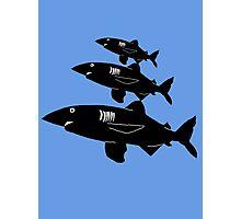 3 Sharks roamin' Photographic Print