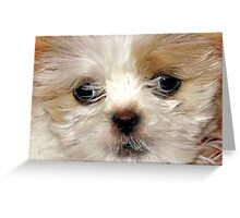 Poofy Puppy Greeting Card