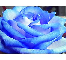 Blue Rose Photographic Print
