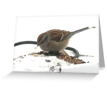 Birdwatch Greeting Card