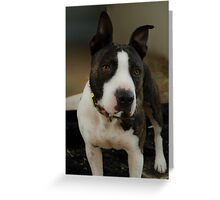 PRECIOUS PITBULL Greeting Card