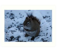 Shivering Red Squirrel Art Print