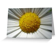 Day's Eye Pupil Greeting Card