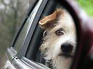 Ride, Ride, Ride, Taken a Ride by NatureGreeting Cards ©ccwri